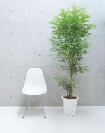 Pflanze_home